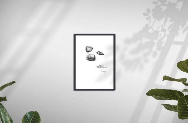 Seaberry-Studio-art-print-three-shells